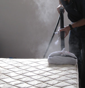 information on bedbug cleaning systems